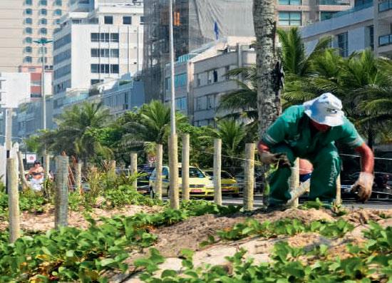 O projeto de recuperação da vegetação native na orla carioca