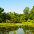 A urbanização, a poluição, o uso excessivo da água e a forte produção agrícola levaram ao desaparecimento de metade dos pântanos mundiais no século 20. O alerta, feito nesta terça-feira […]