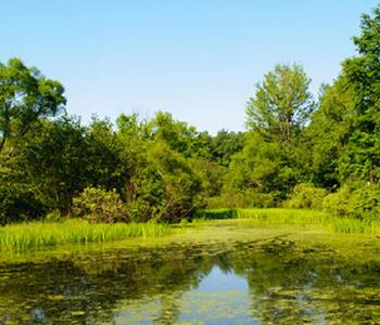 Pesquisa citou o Pantanal brasileiro como um dos mais importantes do mundo ao lado do Lago Chade e Delta do Danúnio; pântanos contribuem para purificação da água e produção de alimentos.