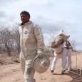 """Um apicultor leva um jumento para extrair mel no sertão do Ceará no distrito de Cachoeira, em Itatira, a 220 km de Fortaleza. Há 10 anos, o """"jumento apicultor"""", vestido […]"""