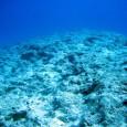 Os corais estão entre os ecossistemas mais ricos e, infelizmente, entre os mais vulneráveis do planeta. Devido à grande quantidade de espécies que dependem deles, cientistas de todo o mundo […]