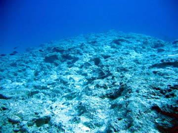 Duas novas pesquisas que estão sendo realizadas na Austrália, Galápagos e no Mar Vermelho pretendem avaliar o atual estado destes ecossistemas para descobrir como eles estão respondendo aos efeitos das mudanças climáticas