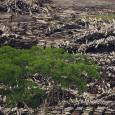 Relatório publicado nesta quinta-feira (29) pela Agência de Investigação Ambiental, organização não governamental do Reino Unido, aponta que a China é o pais que mais importa, exporta e consome madeira […]