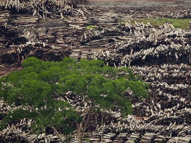 Imagem aérea de desmatamento divulgada pelo Pnuma (Foto: Divulgação/iStockphoto/Gyi/Pnuma)