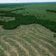A derrubada ilegal de árvores na Amazônia Legal atingiu a menor taxa anual de desmatamento desde que a região começou a ser monitorada pelo governo, em 1988. De acordo com […]