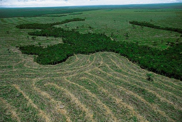 Taxa de desmatamento da Amazônia é a menor já registrada
