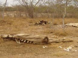 Fetape pede apoio à igreja, deputados e senadores para combater os efeitos da seca