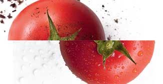 Recente estudo americano aponta que os alimentos orgânicos não seriam mais nutritivos do que os convencionais. Mas será que esse dado é tão relevante assim? Descubra o que dizem os especialistas e faça sua escolha