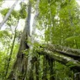 O dia começou com uma boa notícia: em coletiva de imprensa realizada em Brasília nesta terça-feira (27),Izabella Teixeira, ministra do Meio Ambiente do Brasil, anunciou que ataxa de desmatamento da […]