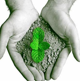 conservação do meio ambiente