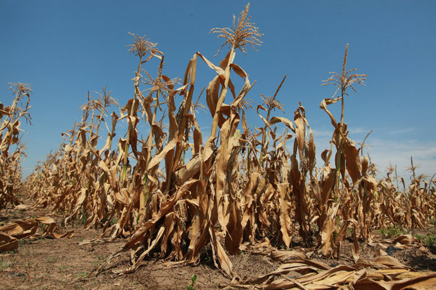 Crédito Imagem: Departamento de Agricultura dos Estados Unidos (USDA)