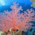 Umnovo estudopublicado neste domingo (24) no periódico Nature Climate Change revela que as mudanças climáticas podem fazer com que os chamados recifes de corais construtores percam espaço para os recifes […]