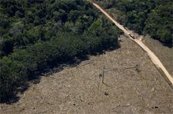 Desmatamento na Amazônia registra aumento de 91%