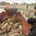 O número de porcos mortos retirados do principal rio de Xangai, o Huangpu, subiu para 13.000, segundo as autoridades locais. O governo da capital económica chinesa anunciou ter retirado nesta […]