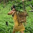 Muitos ainda pensam que conceder grandes extensões de terras para povos indígenas pode levar ao desmatamento, pois temem que os índios tentem lucrar vendendo para outras pessoas o acesso à […]