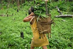 Reservas indígenas são muito eficazes para proteger a floresta Amazônica, afirma estudo