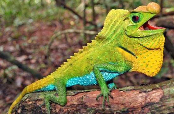 Estudo da Sociedade Zoológica de Londres indica que 19% das espécies de répteis do mundo correm risco de extinção