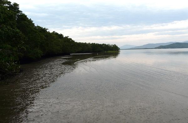O aumento do nível do mar causado pelo aquecimento global pode destruir boa parte dos manguezais e pântanos do planeta, acabando com serviços ecossistêmicos vitais para o homem e gerando um prejuízo anual de US$ 630 milhões