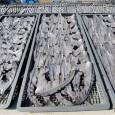 As Nações Unidas lançaram um alerta sobre o risco de extinção de tubarões no Mar Mediterrâneo e no Mar Morto. Em comunicado, emitido nesta quinta-feira, a agência da ONU para […]