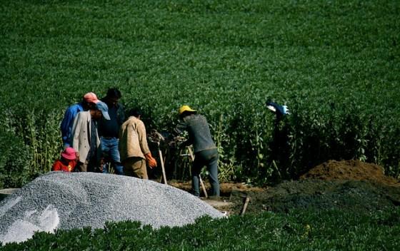 """Nutriente que serviu de pilar da """"Revolução Verde"""" na agricultura está se tranformando em um vilão ambiental. Estudo indica que a poluição do solo por nitrogênio cresceu 60% em 30 anos"""