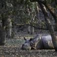 Os chifres de rinoceronte e de elefante, assim como as barbatanas de tubarão, são alvo de tráfico de tal magnitude que todas estas espécies estão ameaçadas e terão lugar de […]
