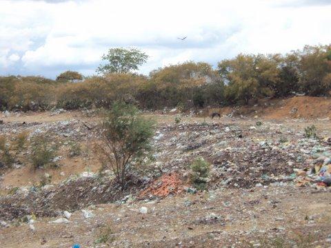 A degradação ambiental no sertão nordestino só contribui para agravar a situação da seca. / Fotos: Liliana Peixinho
