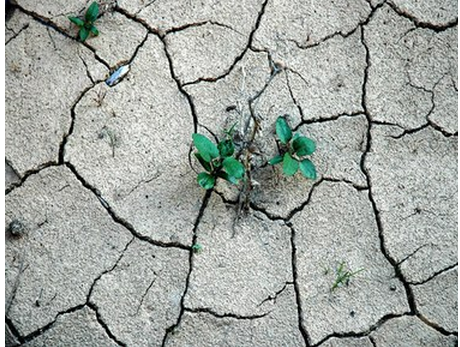 Canadá abandona Convenção da ONU de Combate à Desertificação