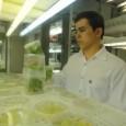 Um estudo desenvolvido pela Empresa Brasileira de Pesquisa Agropecuária (Embrapa), em parceria com a Universidade Federal do Rio de Janeiro (UFRJ), pode ser a solução para os estragos causados pela […]