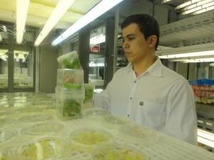 Pesquisadores da Embrapa e UFRJ desenvolvem planta com tolerância à seca