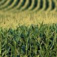 A Organização das Nações Unidas para Agricultura e Alimentação, FAO, afirmou que a agricultura é fundamental para a humanidade. Segundo o vice-diretor-geral da FAO, Dan Gustafson, a adaptação do setor […]