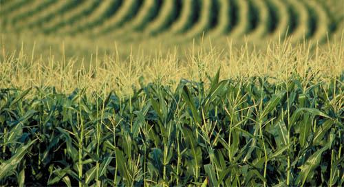 FAO afirma que agricultura é fundamental para sobrevivência humana