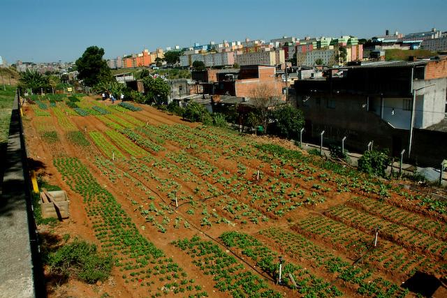 Fotos: Projeto do Cidades Sem Fome em Sapopemba, São Paulo / Cidades Sem Fome Horta comunitária no bairro Chico Mendes, em Florianópolis / Cepagro