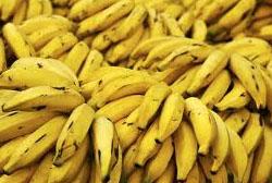 Casca de banana pode descontaminar águas poluídas, diz pesquisa