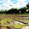 A Caatinga é o único bioma exclusivamente brasileiro. Isso quer dizer que a maior parte da fauna e flora presente nele não existe em nenhum outro lugar do planeta. Ocupando […]