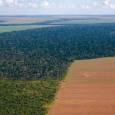 A aprovação do novo Código Florestal vem gerando controvérsias e dúvidas há muito tempo, principalmente entre o agrobusiness e entidades ambientais. Por isso, a Frente Parlamentar Ambientalista, a Fundação SOS […]