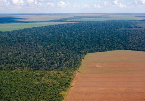 Grupos de Trabalho acompanharão efetivação do Código Florestal
