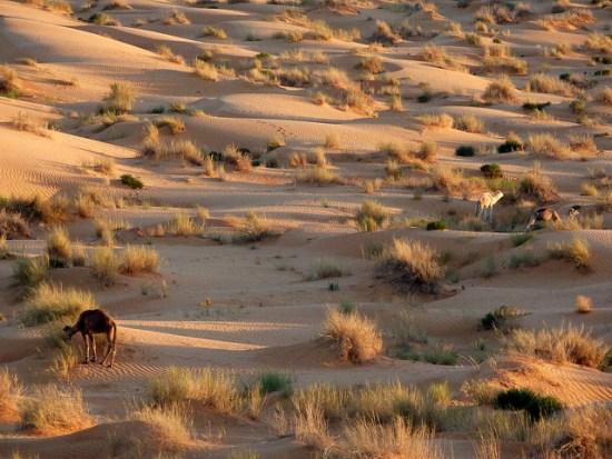 O declínio na quantidade de chuvas, aliado à degradação do solo ocasionada por pecuária e desmatamento, fizeram o deserto do Saara expandir nas últimas décadas