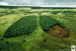 Uma nova ferramenta contra o desmatamento ilegal: tecnologia de DNA para árvores