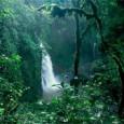 O subsecretário-geral da ONU para Assuntos Econômicos e Sociais afirmou que os serviços fornecidos pelas florestas continuam sendo subestimados, desvalorizados e super explorados. Wu Hongbo fez a declaração nesta segunda-feira, […]