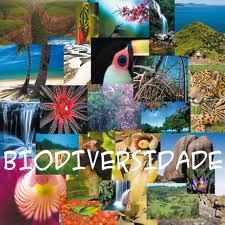 Pesquisa: 75% dos consumidores conhecem o termo biodiversidade