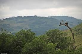 Secretários de Meio Ambiente são presos por fraudes em licenças ambientais no Rio Grande do Sul