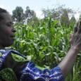 Buscando o empoderamento das mulheres em países em desenvolvimento, uma organização está adicionando mais um padrão ao mix do mercado de carbono, usando a renda dos créditos de carbono para […]