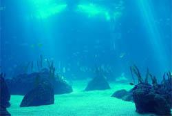 Estudo propõe monitoramento dos ecossistemas costeiros marinhos