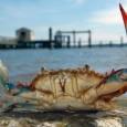 Não são apenas ascabras que estão tirando proveito do aquecimento global. Uma pesquisa indica que a acidificação dos oceanos, provocada pela alta concentração de dióxido de carbono, vilão do efeito […]