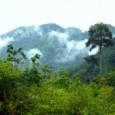 O secretariado da Convenção Quadro das Nações Unidas sobre Mudanças Climáticas (UNFCCC) divulgou umdocumentocontendo os pontos de vista de três países – Brasil, Japão e Malásia – sobre questões relacionadas […]