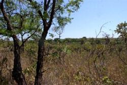Líder de desmatamento no mundo, Brasil pode ampliar plantio no Cerrado