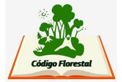 Governo e ONGs criam iniciativas para o Código Florestal