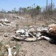 Cerca de 70% dos 184 municípios de Pernambuco estão em situação de emergência por causa da seca. De acordo com um balanço divulgado pela Secretaria da Casa Militar na […]