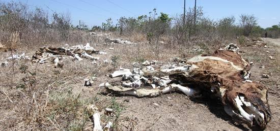 Seca: 136 municípios de Pernambuco em situação de emergência