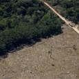 O desmatamento e a degradação de florestas na Amazônia atingiram uma área de quase 175 quilômetros quadrados (km²) nos meses de março e abril deste ano. O levantamento de alertas […]